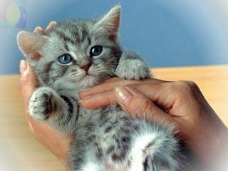 Как ухаживать за маленьким котенком: Котята